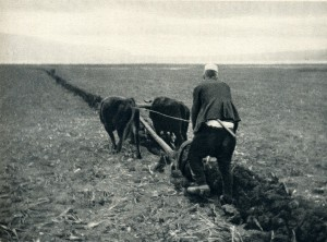 GM078: Ploughing on the banks of Lake Ohrid near Pogradec (Photo: Giuseppe Massani, 1940).