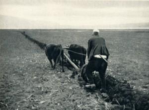 GM078: Ploughing on the banks of Lake Ohrid near Pogradec (Photo: Giuseppe Massani, 1940).